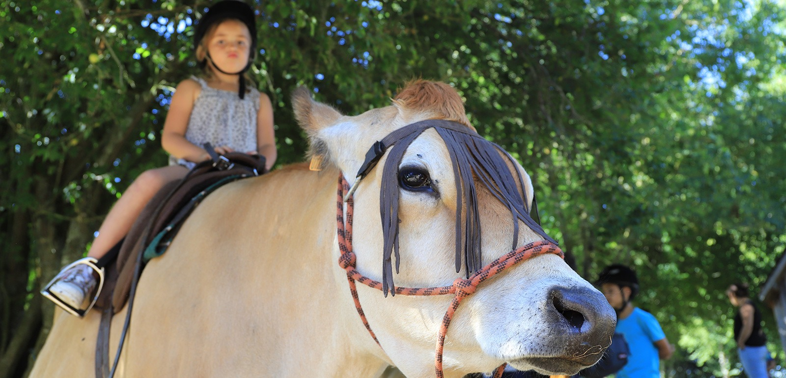 Balade à dos de vache à la Roche d'Oëtre © JE Rubio