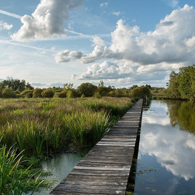 Marais du grand Hazé © D. Commenchal