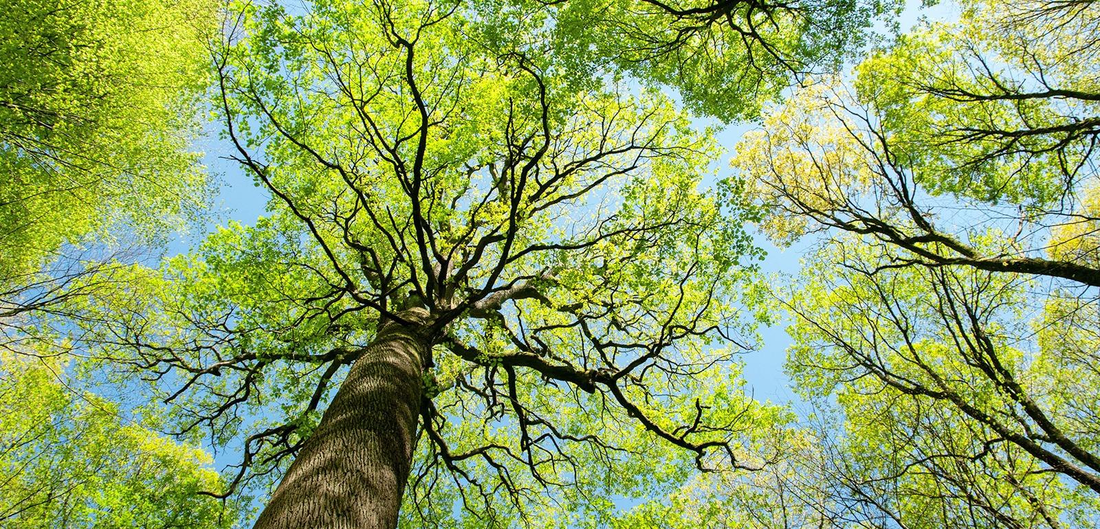 Forêt © D. Commenchal