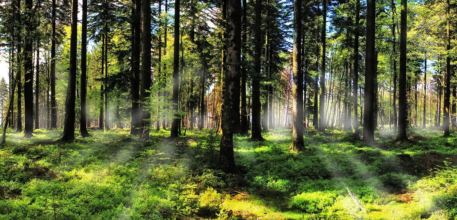 Forêt Orne © JE Rubio
