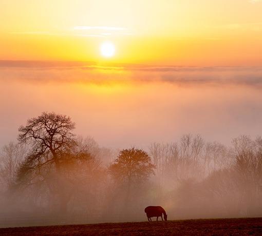 Paysage Orne © D. Commenchal