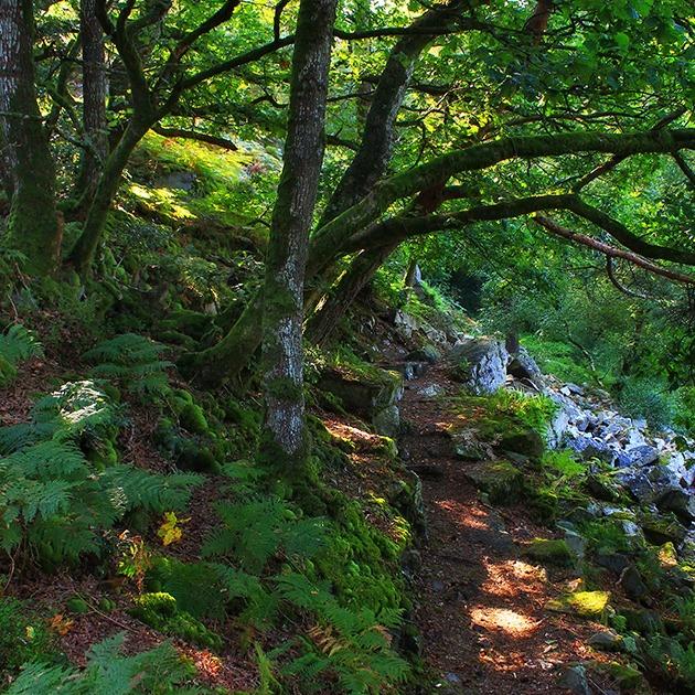 Forêt © JE Rubio