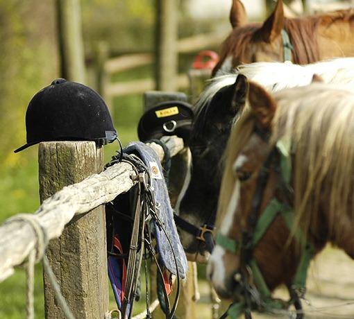 Centres d'équitation © D. Commenchal